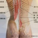 なかなかほぐれない筋肉に対して アプローチの考え方