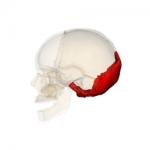 上部頚椎は、 後頭骨で治せ!