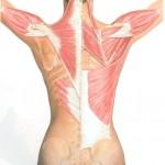 第4回『施術解剖学セミナー』〜上肢の施術解剖学