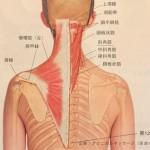 施術のポイント 「肩関節型」前編