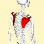 施術のポイント 「肩関節型」後編