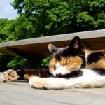 猫背矯正施術は3分類