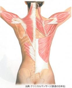 施術解剖学セミナー図4-4-1-1